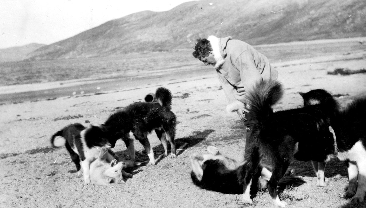 Husky Dogs - Sugluk Inlet, Institute for Northern Studies fonds